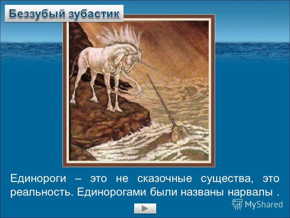 Единороги – это не сказочные существа, это реальность. Единорогами были названы нарвалы.