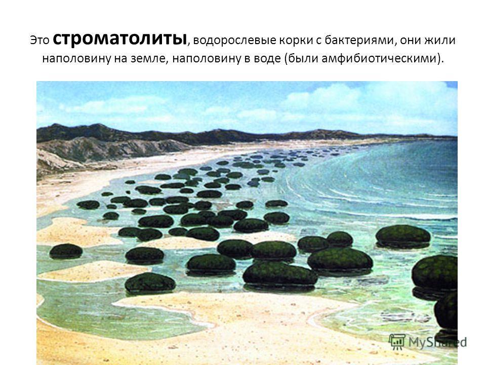Это строматолиты, водорослевые корки с бактериями, они жили наполовину на земле, наполовину в воде (были амфибиотическими).