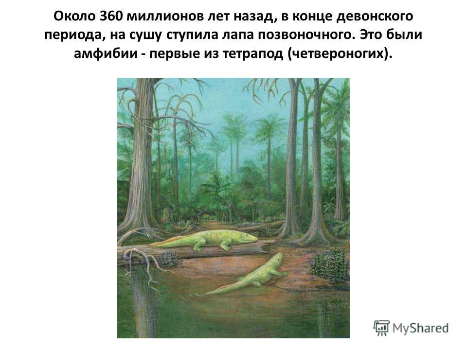 Около 360 миллионов лет назад, в конце девонского периода, на сушу ступила лапа позвоночного. Это были амфибии - первые из тетрапод (четвероногих).