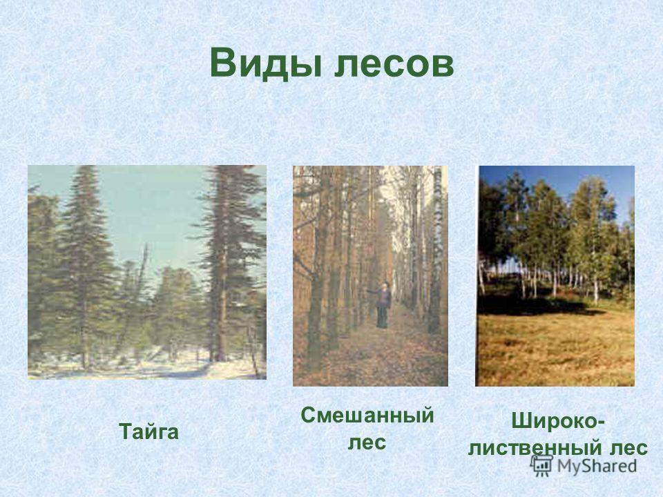 Виды лесов Тайга Смешанный лес Тайга Смешанный лес Широко- лиственный лес