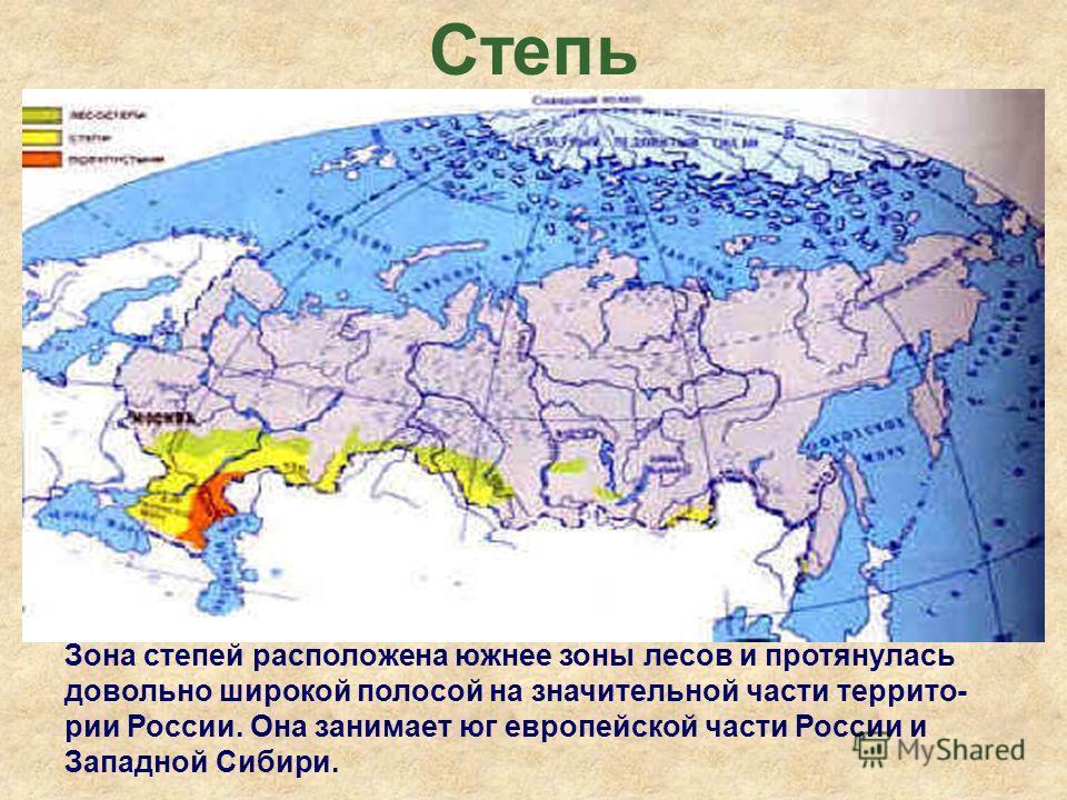 Степь Зона степей расположена южнее зоны лесов и протянулась довольно широкой полосой на значительной части террито- рии России. Она занимает юг европейской части России и Западной Сибири.