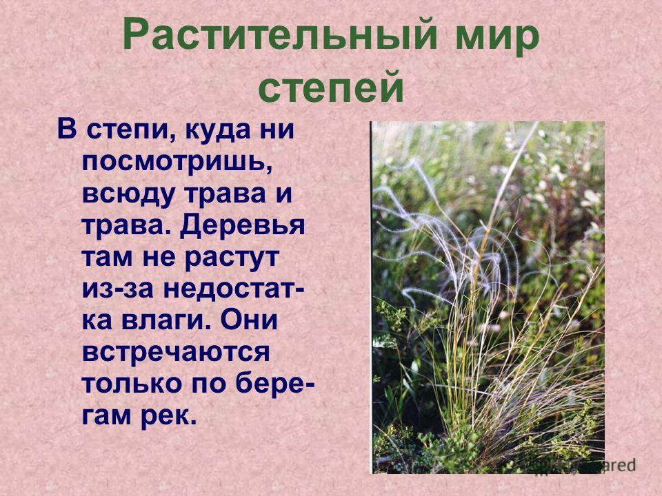 Растительныйй мир степей В степи, куда ни посмотришь, всюду трава и трава. Деревья там не растут из-за недостат- ка влаги. Они встречаются только по бере- гам рек.