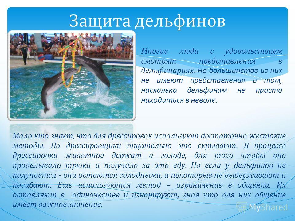 Защита дельфинов Многие люди с удовольствием смотрят представления в дельфинариях. Но большинство из них не имеют представления о том, насколько дельфинам не просто находиться в неволе. Мало кто знает, что для дрессировок используют достаточно жесток