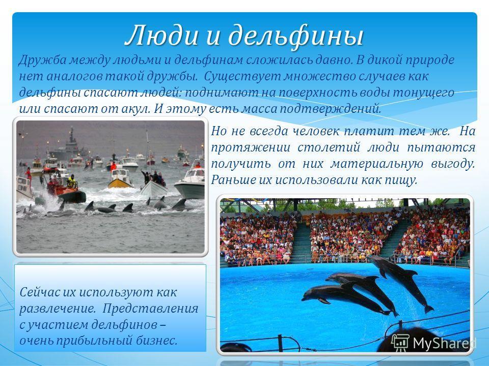 Люди и дельфины Дружба между людьми и дельфинам сложилась давно. В дикой природе нет аналогов такой дружбы. Существует множество случаев как дельфины спасают людей: поднимают на поверхность воды тонущего или спасают от акул. И этому есть масса подтве