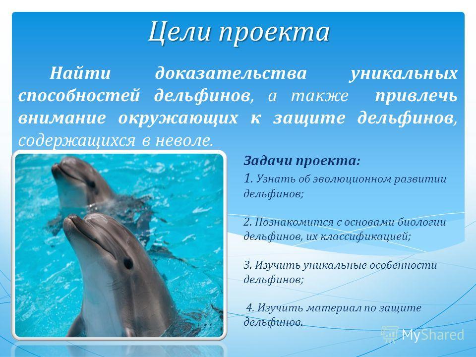 Задачи проекта: 1. Узнать об эволюционном развитии дельфинов; 2. Познакомится с основами биологии дельфинов, их классификацией; 3. Изучить уникальные особенности дельфинов; 4. Изучить материал по защите дельфинов. Найти доказательства уникальных спос
