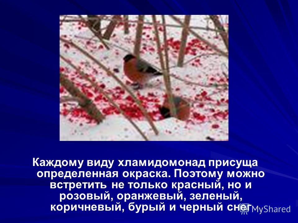 Каждому виду хламидомонад присуща определенная окраска. Поэтому можно встретить не только красный, но и розовый, оранжевый, зеленый, коричневый, бурый и черный снег