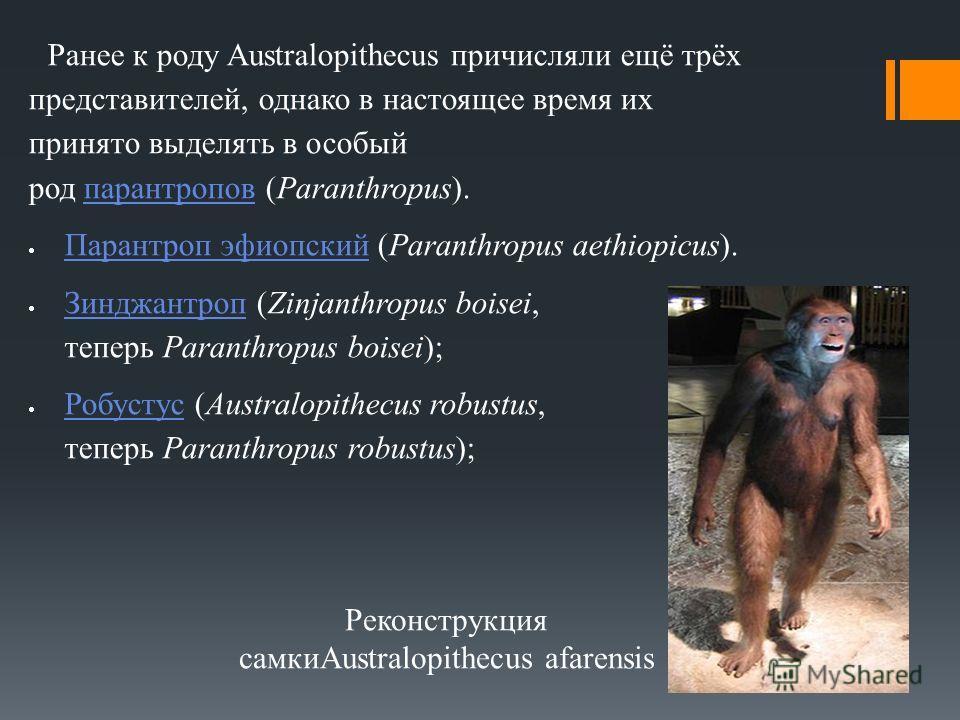 Ранее к роду Australopithecus причисляли ещё трёх представителей, однако в настоящее время их принято выделять в особый род парантропов (Paranthropus).парантропов Парантроп эфиопский (Paranthropus aethiopicus). Парантроп эфиопский Зинджантроп (Zinjan