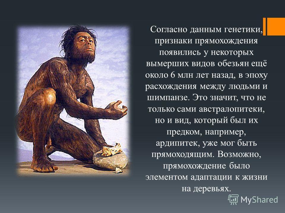 Согласно данным генетики, признаки прямохождения появились у некоторых вымерших видов обезьян ещё около 6 млн лет назад, в эпоху расхождения между людьми и шимпанзе. Это значит, что не только сами австралопитеки, но и вид, который был их предком, нап