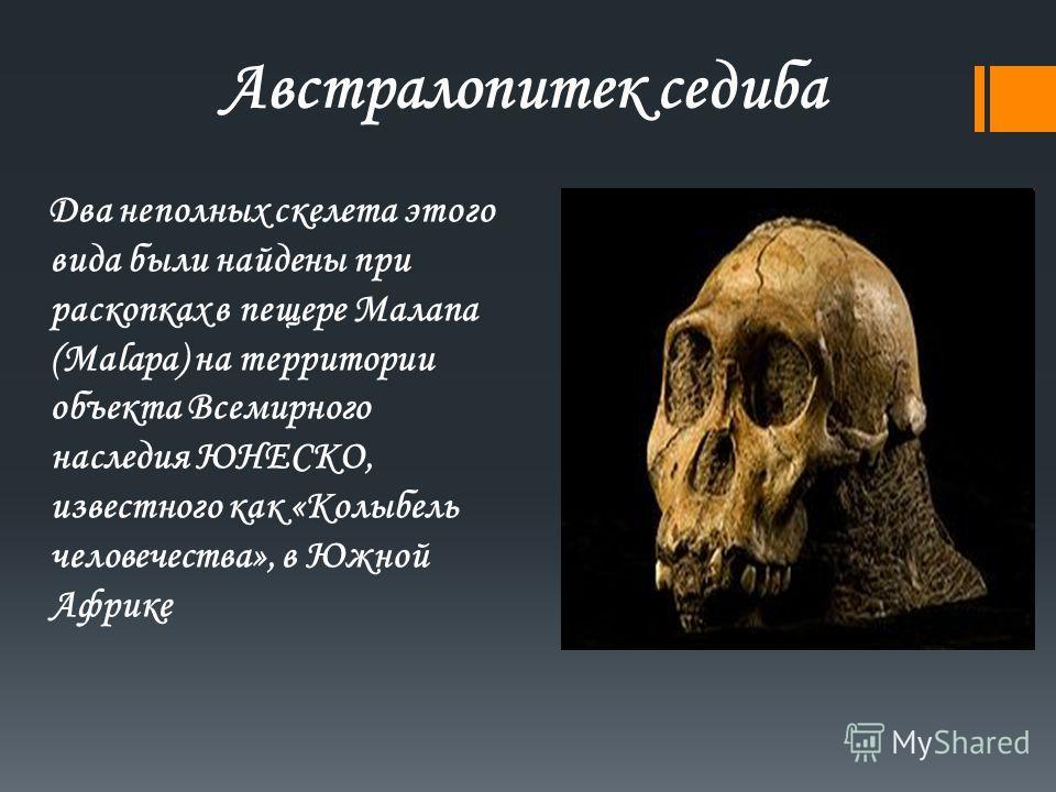 Австралопитек седина Два неполных скелета этого вида были найдены при раскопках в пещере Малапа (Malapa) на территории объекта Всемирного наследия ЮНЕСКО, известного как «Колыбель человечества», в Южной Африке