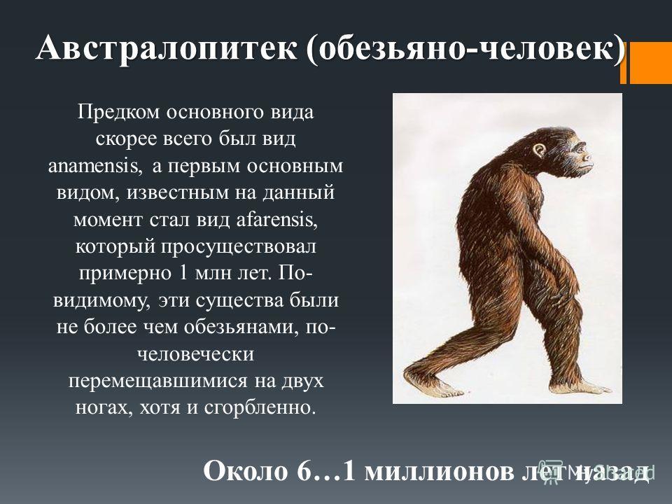 Австралопитек (обезьяно-человек) Около 6…1 миллионов лет назад Предком основного вида скорее всего был вид anamensis, а первым основным видом, известным на данный момент стал вид afarensis, который просуществовал примерно 1 млн лет. По- видимому, эти