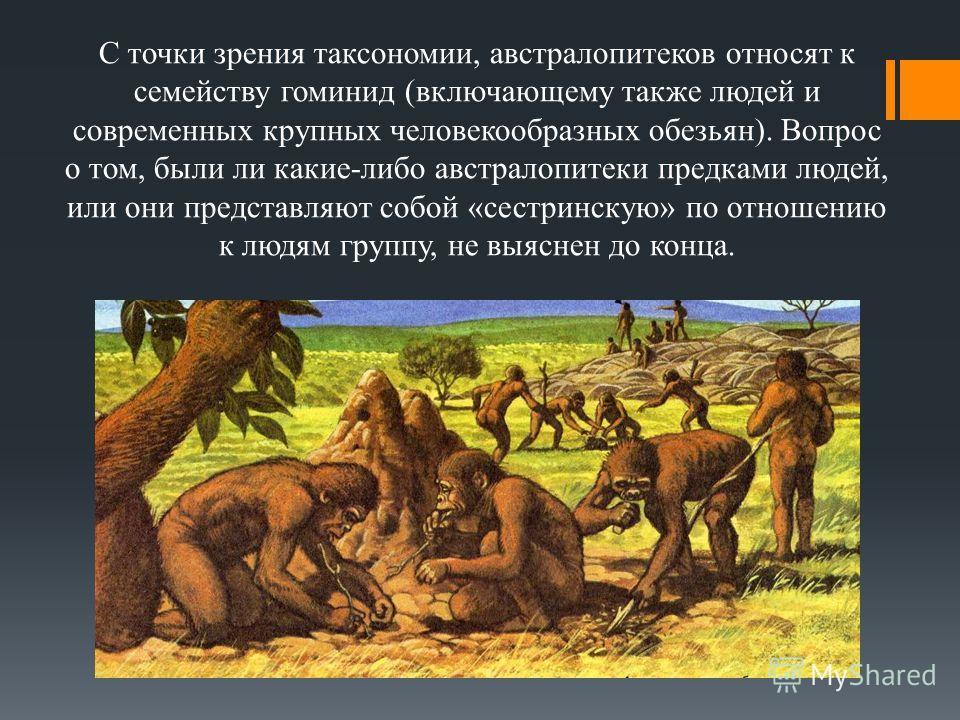 С точки зрения таксономии, австралопитеков относят к семейству гоминид (включающему также людей и современных крупных человекообразных обезьян). Вопрос о том, были ли какие-либо австралопитеки предками людей, или они представляют собой «сестринскую»