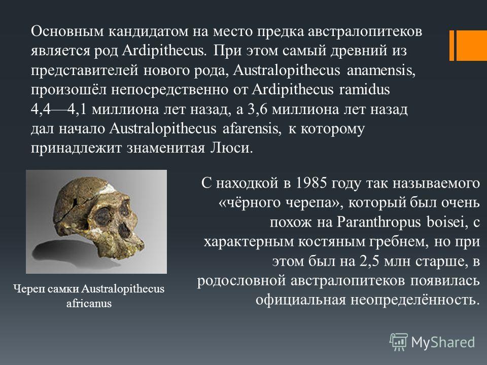 С находкой в 1985 году так называемого «чёрного черепа», который был очень похож на Paranthropus boisei, с характерным костяным гребнем, но при этом был на 2,5 млн старше, в родословной австралопитеков появилась официальная неопределённость. Череп са