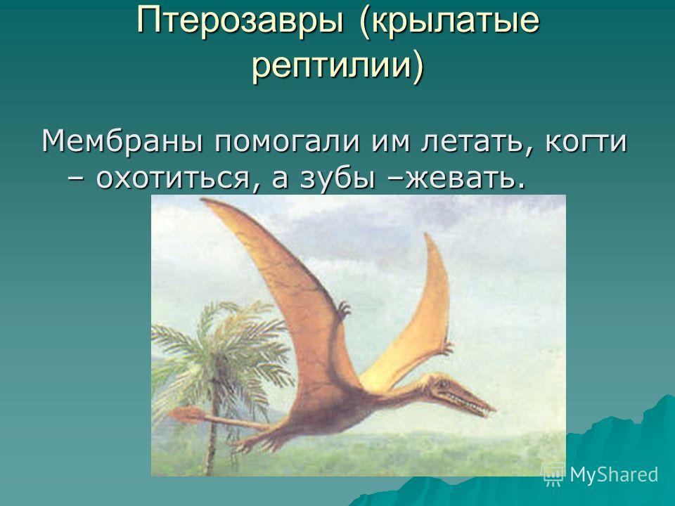 Птерозавры (крылатые рептилии) Мембраны помогали им летать, когти – охотиться, а зубы –жевать.