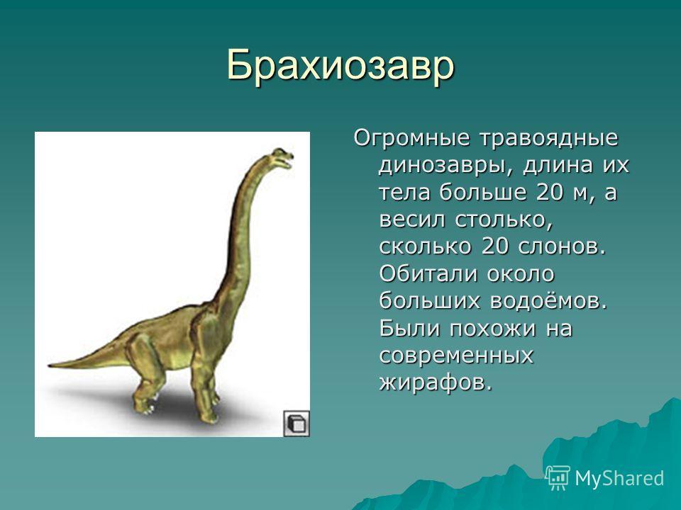 Брахиозавр Огромные травоядные динозавры, длина их тела больше 20 м, а весил столько, сколько 20 слонов. Обитали около больших водоёмов. Были похожи на современных жирафов.
