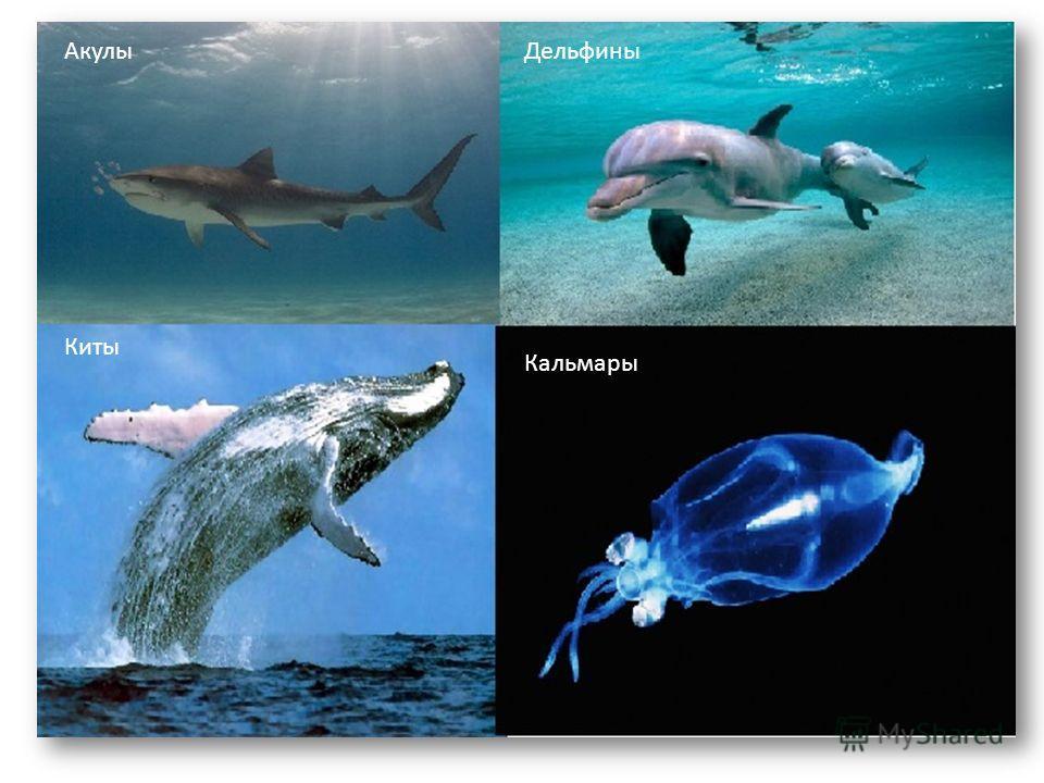Акулы Дельфины Киты Кальмары