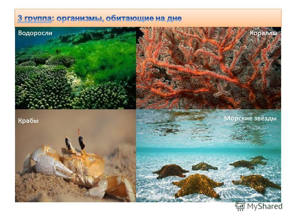 Водоросли Кораллы Крабы Морские звёзды