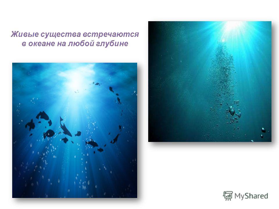 Живые существа встречаются в океане на любой глубине