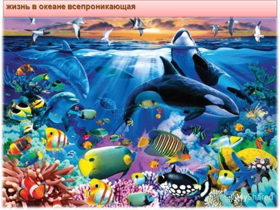 жизнь в океане всепроникающая