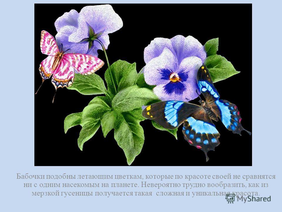 Бабочки подобны летающим цветкам, которые по красоте своей не сравнятся ни с одним насекомым на планете. Невероятно трудно вообразить, как из мерзкой гусеницы получается такая сложная и уникальная красота.