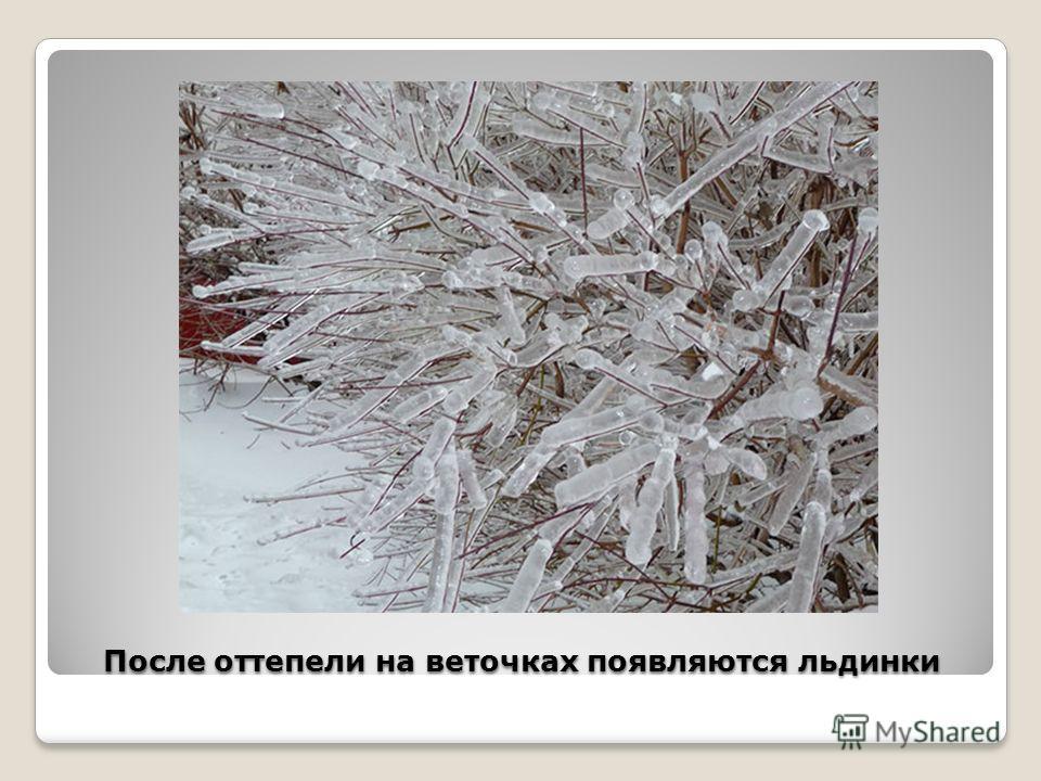 После оттепели на веточках появляются льдинки После оттепели на веточках появляются льдинки