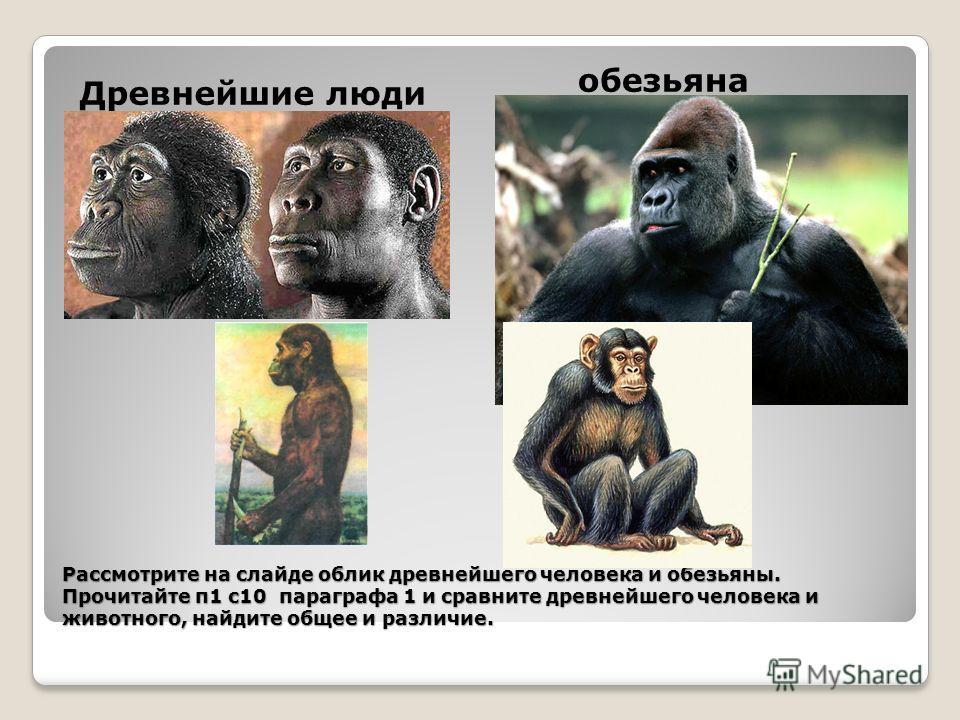Рассмотрите на слайде облик древнейшего человека и обезьяны. Прочитайте п 1 с 10 параграфа 1 и сравните древнейшего человека и животного, найдите общее и различие. Древнейшие люди обезьяна