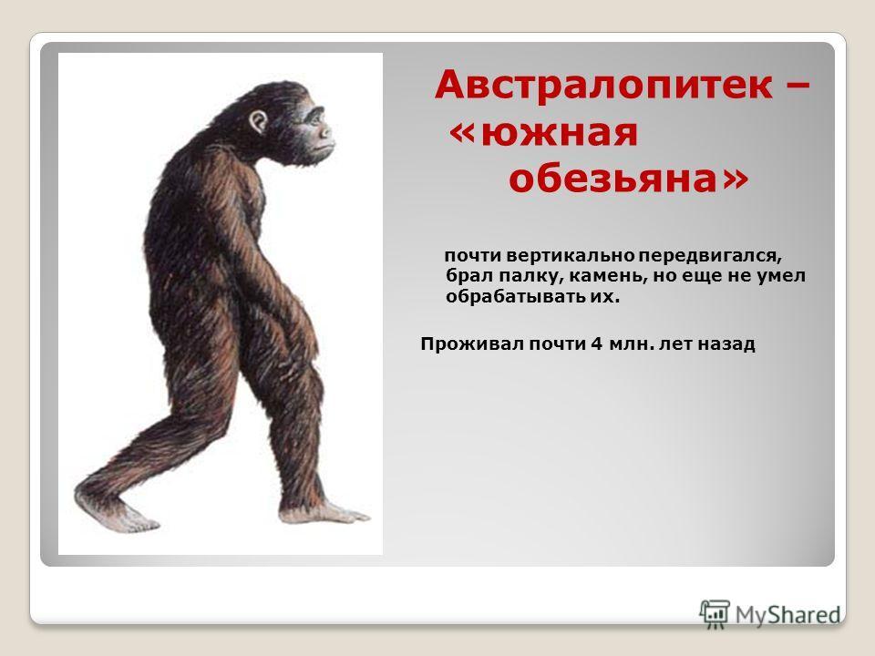 Австралопитек – «южная обезьяна» почти вертикально передвигался, брал палку, камень, но еще не умел обрабатывать их. Проживал почти 4 млн. лет назад