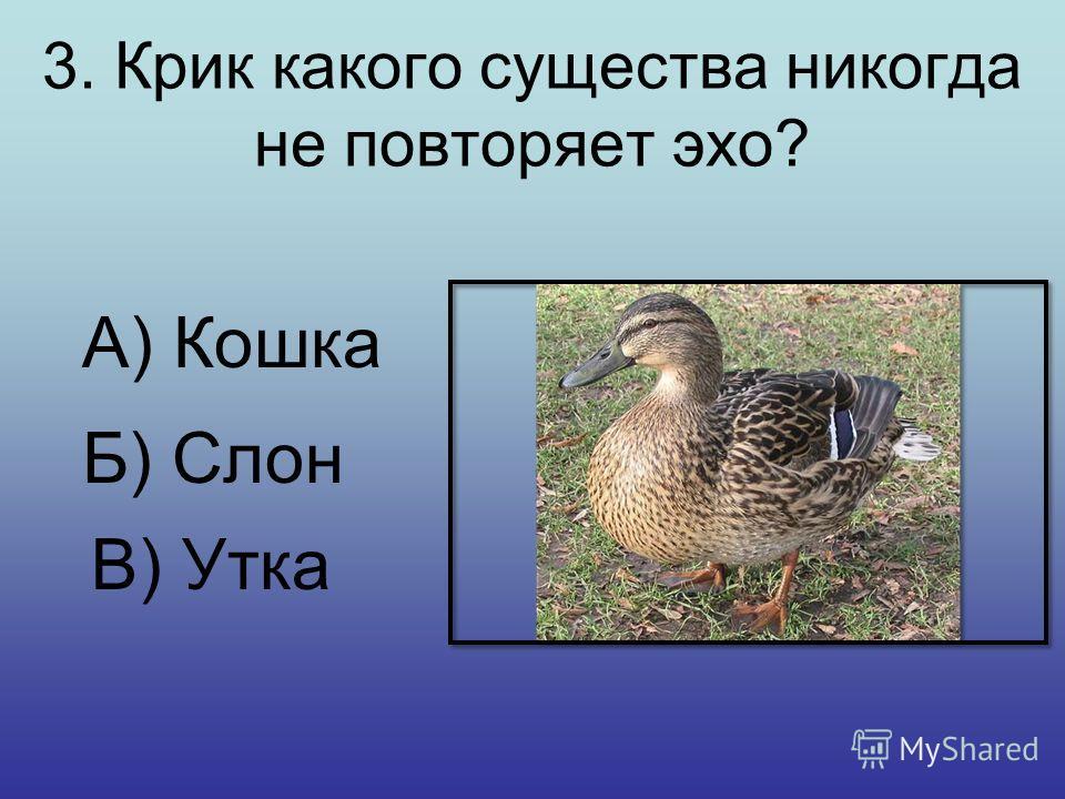 2. Какое животное является самым крупным среди грызунов? А) Белка Б) Капибара В) Сурок или водосвинка