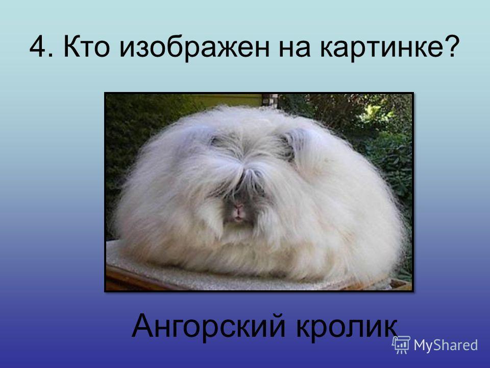 3. Крик какого существа никогда не повторяет эхо? Б) Слон В) Утка А) Кошка