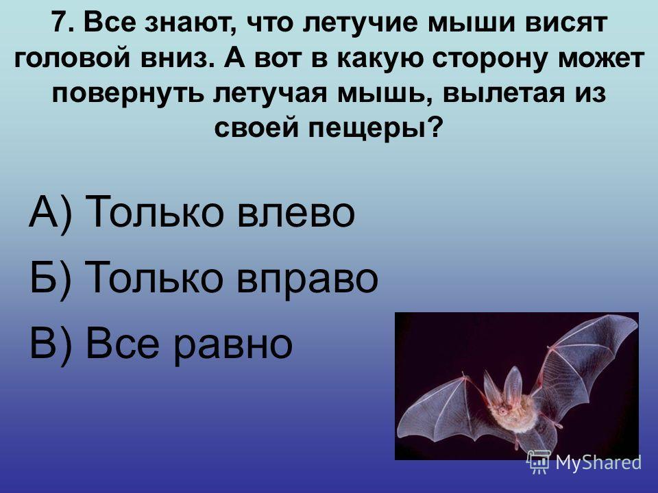 6. У какого известного животного ушки как локаторы настраиваются независимо друг от друга в любом направлении? А) Кошка Б) Летучая мышь В) Коала на ушках 27 мускулов и они движутся независимо друг от друга.