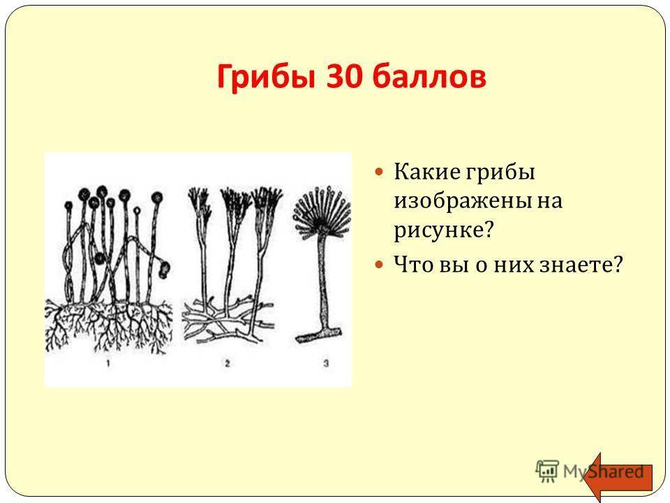 Грибы 30 баллов Какие грибы изображены на рисунке ? Что вы о них знаете ?