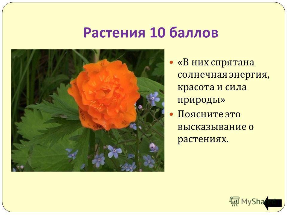 Растения 10 баллов «В них спрятана солнечная энергия, красота и сила природы» Поясните это высказывание о растениях.