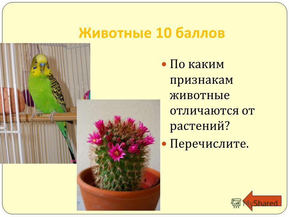 Животные 10 баллов По каким признакам животные отличаются от растений? Перечислите.