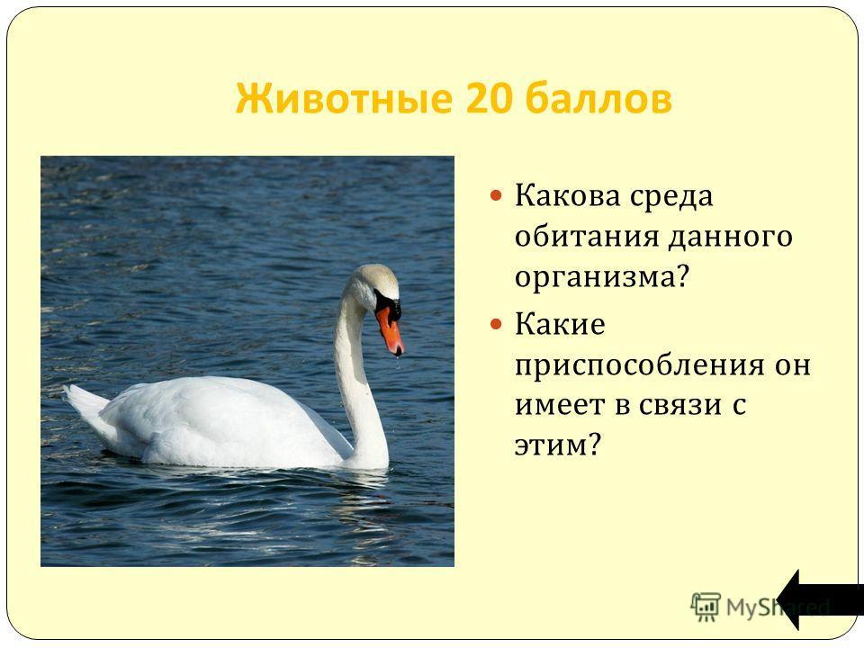 Животные 20 баллов Какова среда обитания данного организма? Какие приспособления он имеет в связи с этим?