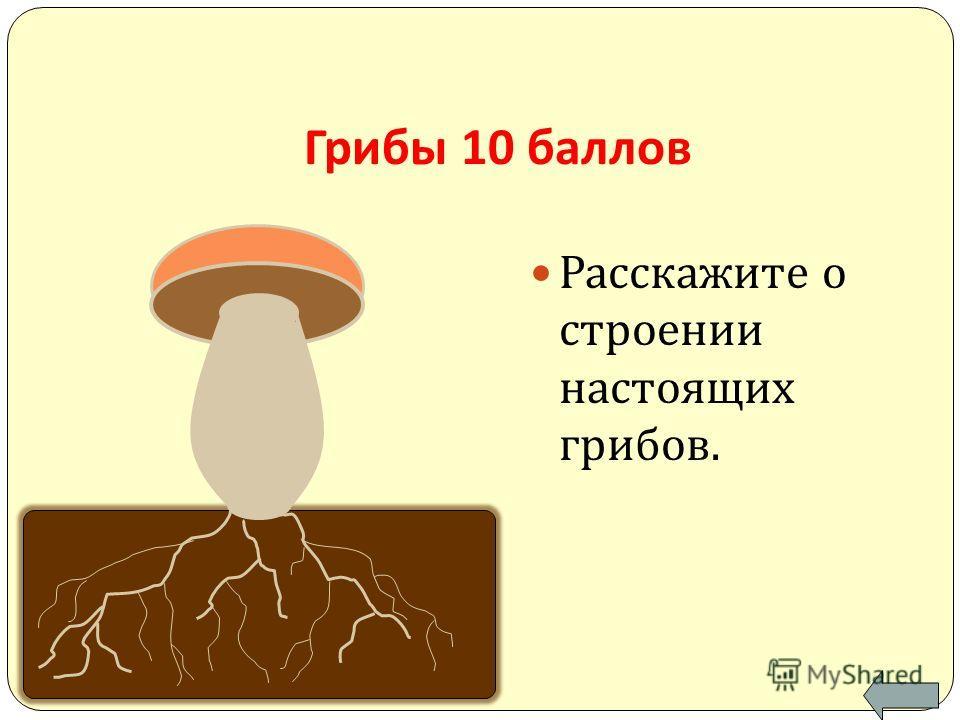 Грибы 10 баллов Расскажите о строении настоящих грибов.
