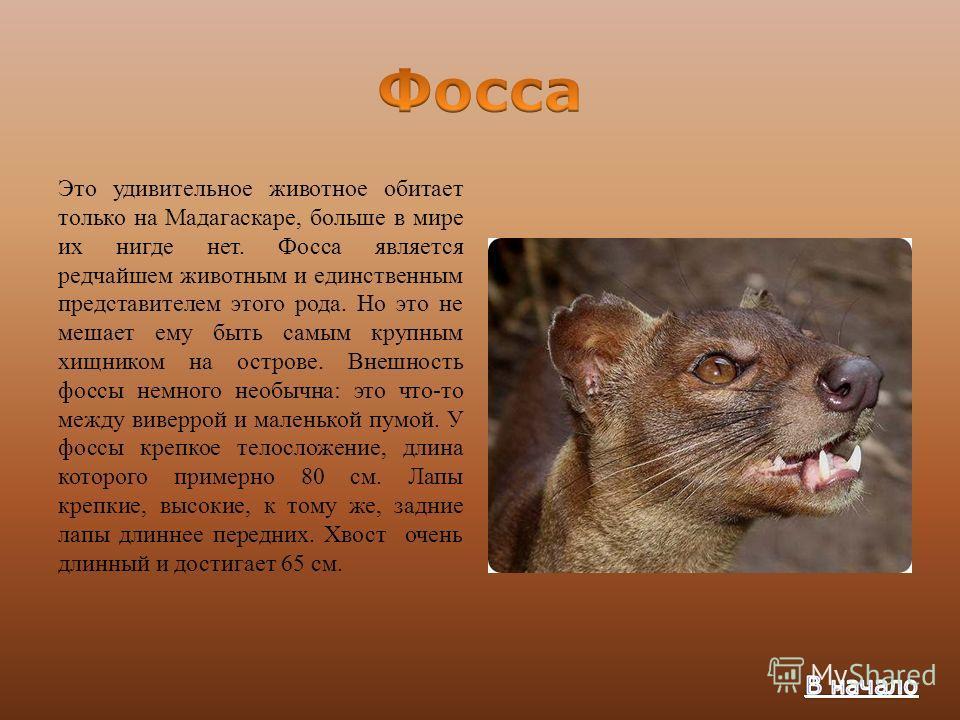 этого необычные животные мира с описанием с картинками презентация помнить
