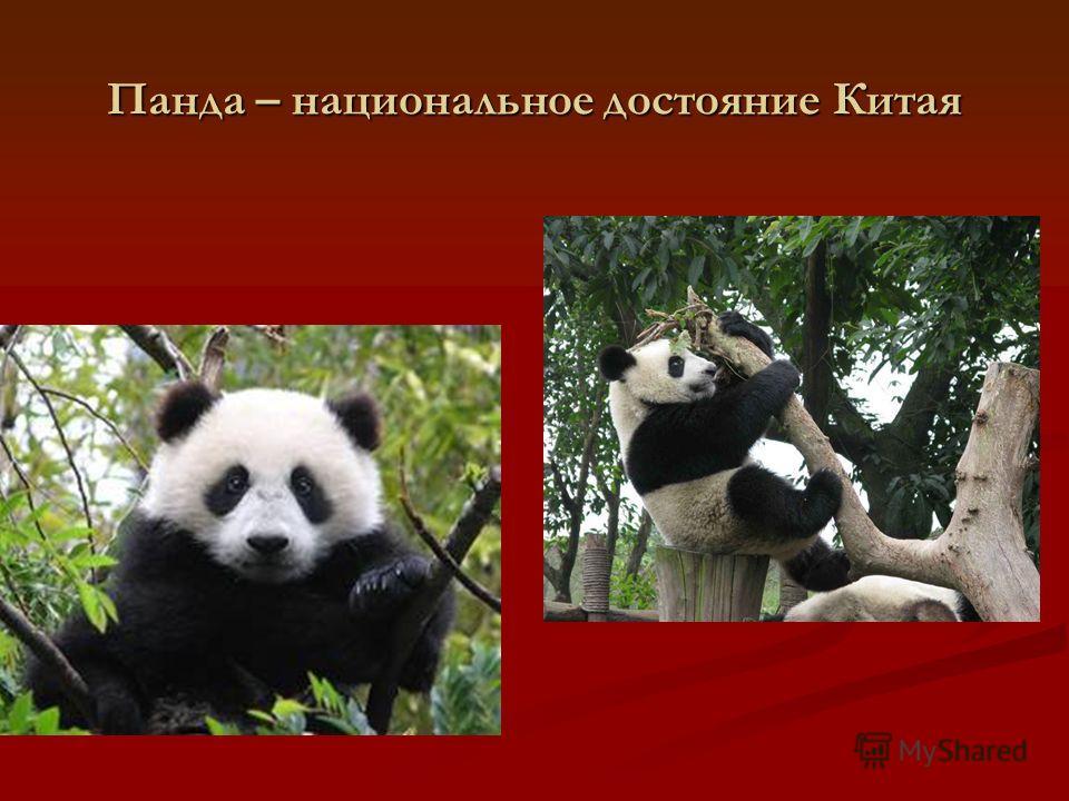 Панда – национальное достояние Китая