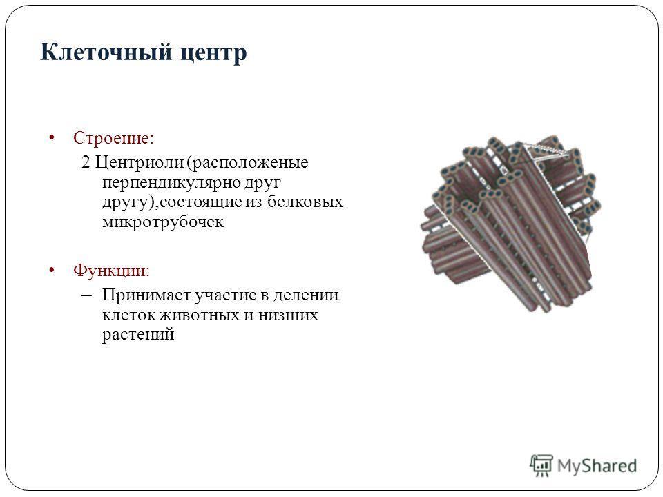 Клеточный центр Строение: 2 Центриоли (расположены перпендикулярно друг другу),состоящие из белковых микротрубочек Функции: – Принимает участие в делении клеток животных и низших растений