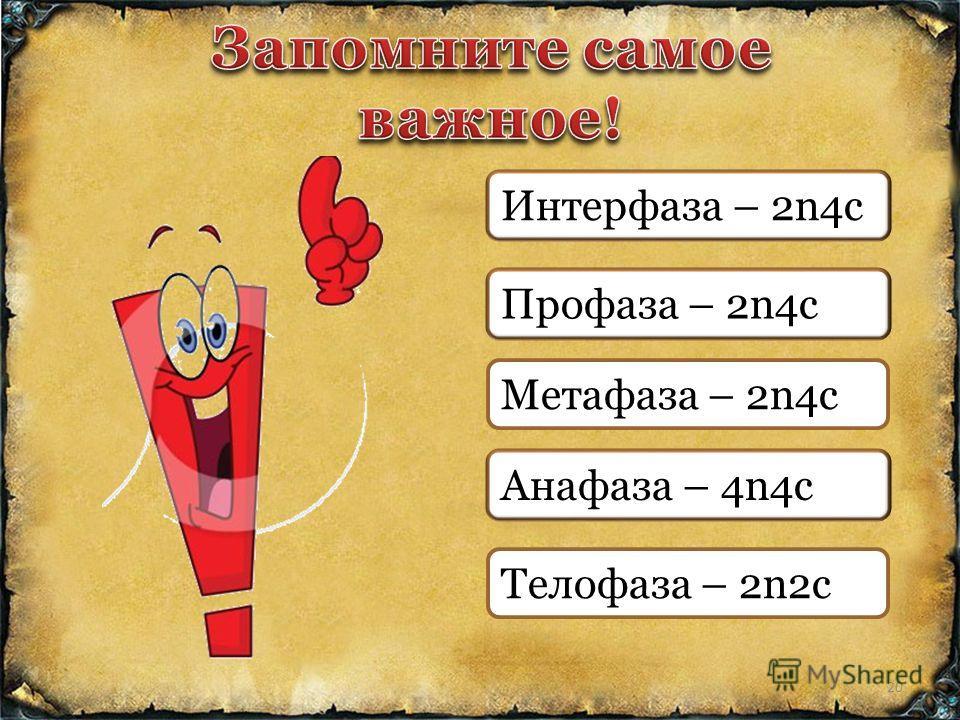 Интерфаза – 2n4c Профаза – 2n4c Метафаза – 2n4c Анафаза – 4n4c Телофаза – 2n2c 20