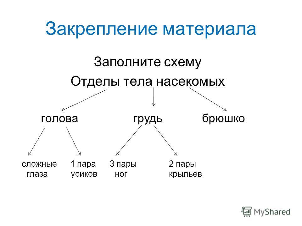 материала Заполните схему