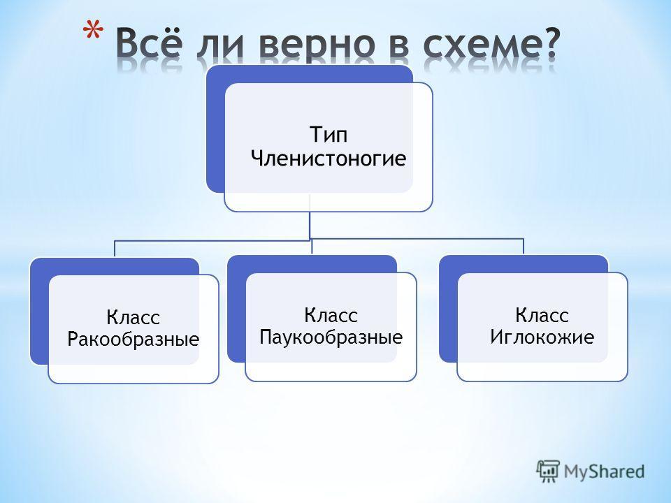 Тип Членистоногие Класс Ракообразные Класс Паукообразные Класс Иглокожие