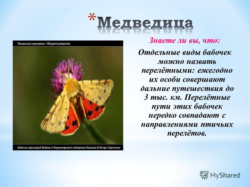 Знаете ли вы, что: Отдельные виды бабочек можно назвать перелётными: ежегодно их особи совершают дальние путешествия до 3 тыс. км. Перелётные пути этих бабочек нередко совпадают с направлениями птичьих перелётов.