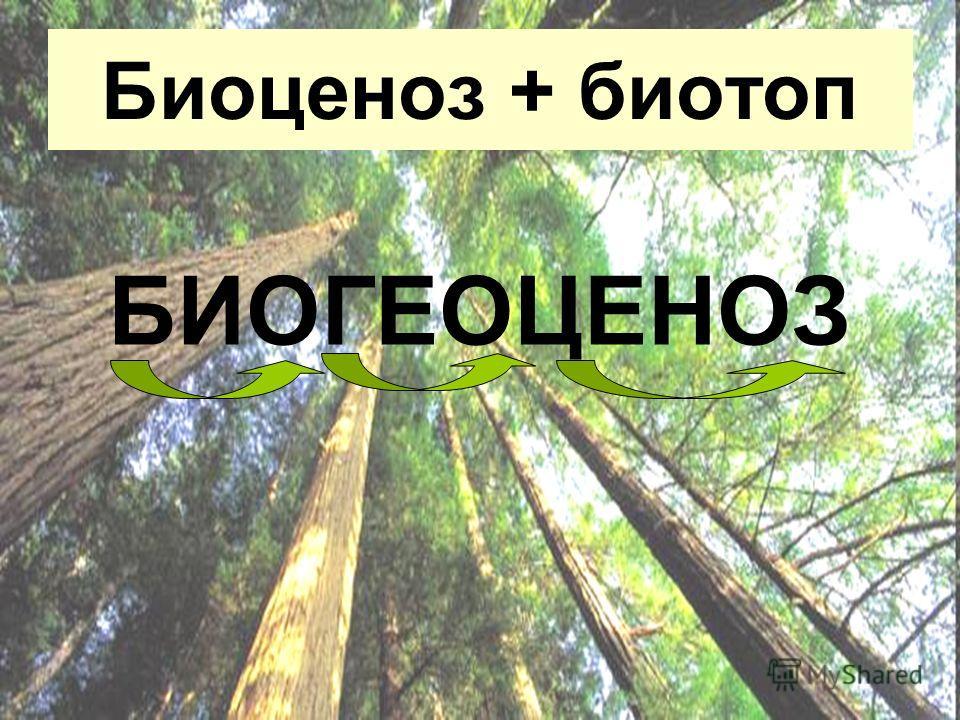 Биоценоз + биотоп БИОГЕОЦЕНОЗ