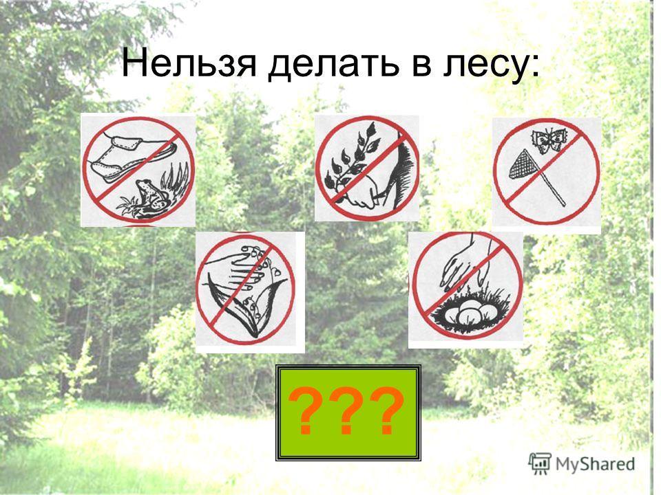 Нельзя делать в лесу: ???