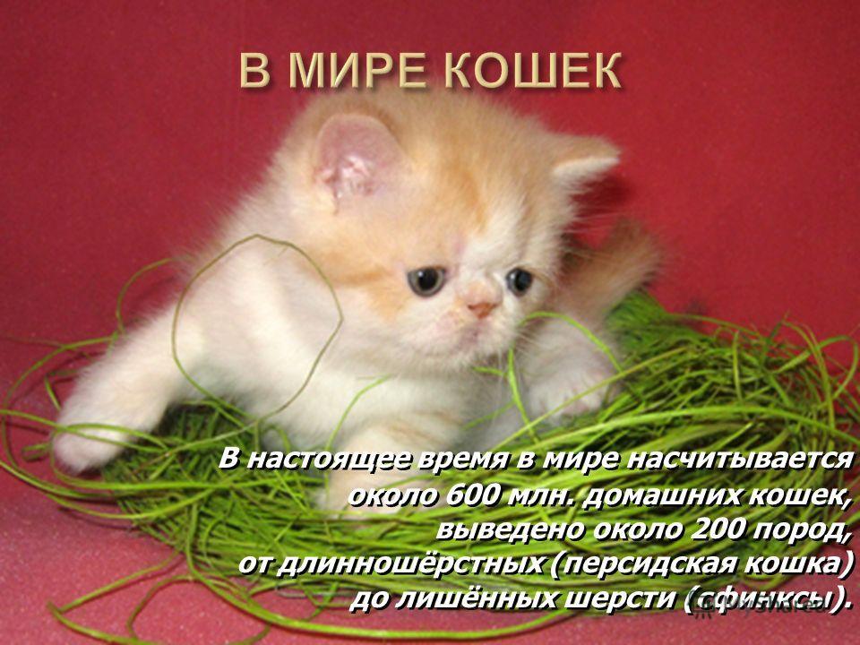 В настоящее время в мире насчитывается около 600 млн. домашних кошек, выведено около 200 пород, от длинношёрстных (персидская кошка) до лишённых шерсти (сфинксы). В настоящее время в мире насчитывается около 600 млн. домашних кошек, выведено около 20