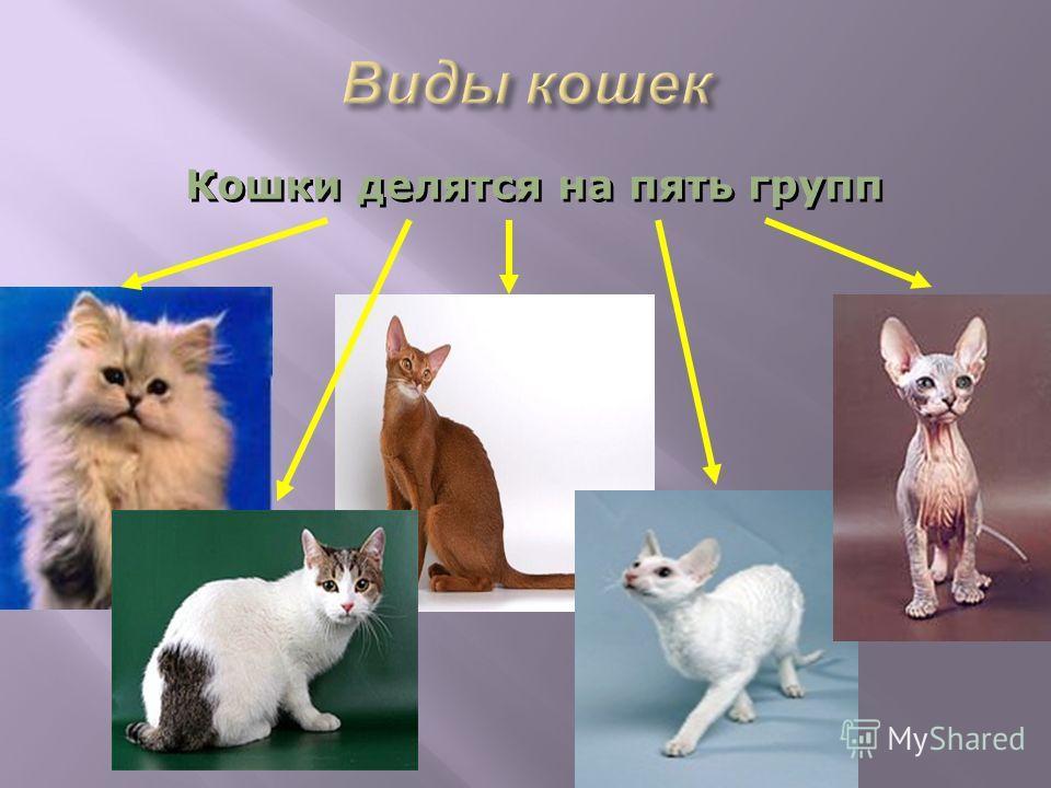 Кошки делятся на пять групп Кошки делятся на пять групп