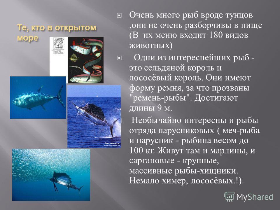 Те, кто в открытом море Очень много рыб вроде тунцов, они не очень разборчивы в пище ( В их меню входит 180 видов животных ) Одни из интереснейших рыб - это сельдяной король и лососёвый король. Они имеют форму ремня, за что прозваны