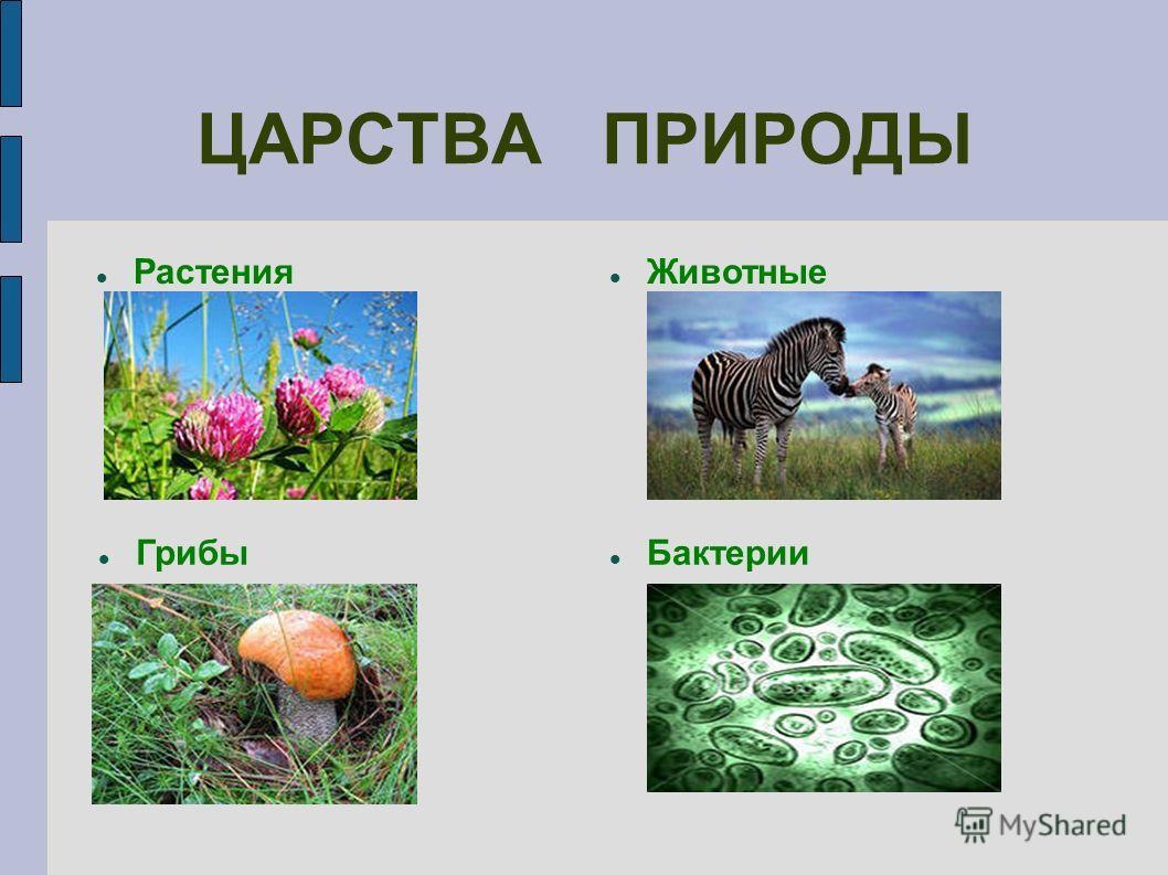 ЦАРСТВА ПРИРОДЫ Растения Животные Бактерии Грибы