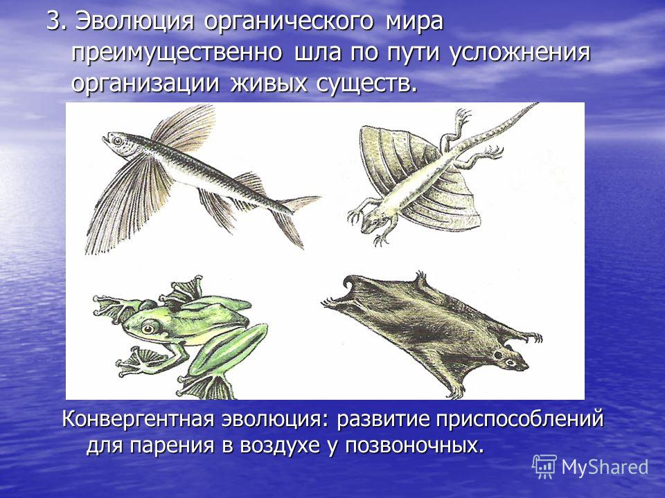 3. Эволюция органического мира преимущественно шла по пути усложнения организации живых существ. Конвергентная эволюция: развитие приспособлений для парения в воздухе у позвоночных.