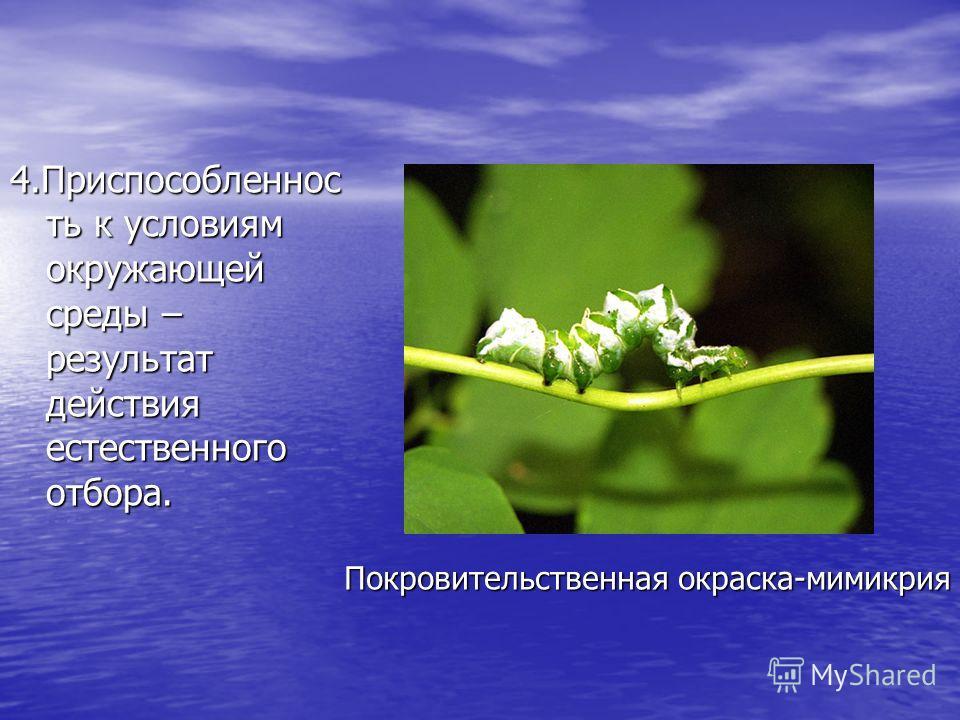 4. Приспособленнос ть к условиям окружающей среды – результат действия естественного отбора. Покровительственная окраска-мимикрия
