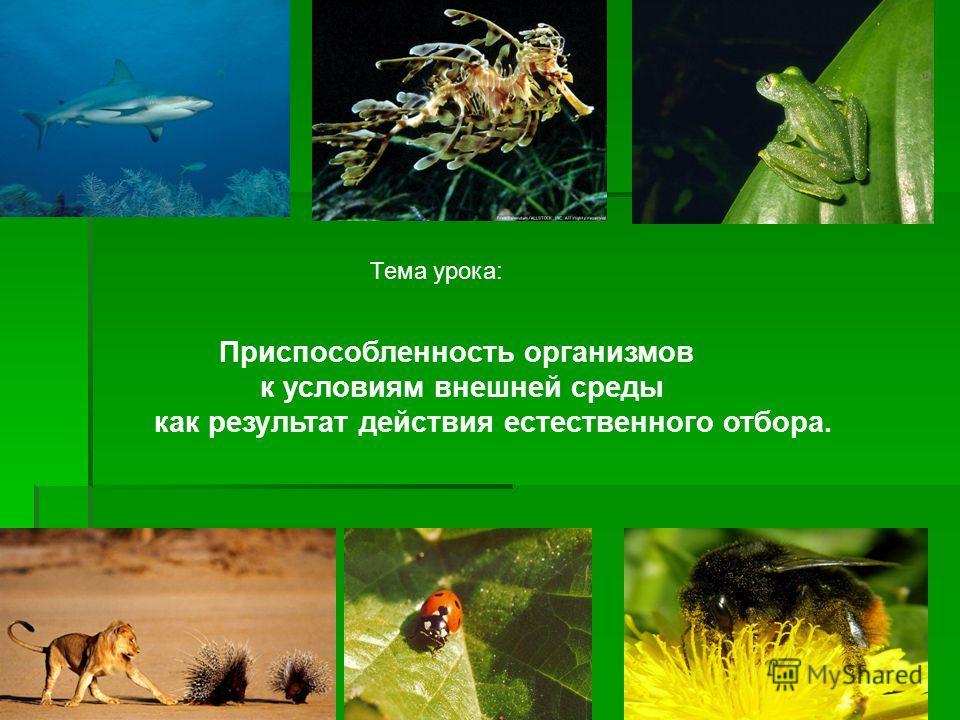 Тема урока: Приспособленность организмов к условиям внешней среды как результат действия естественного отбора.